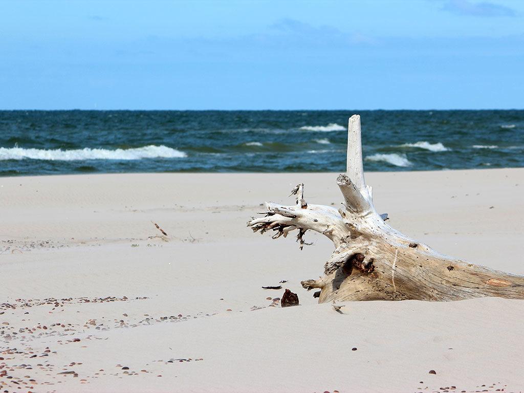 Kociokwik_Słowiński Park Narodowy 12 - plaża
